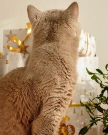 Czy jesteś przygotowany na święta?